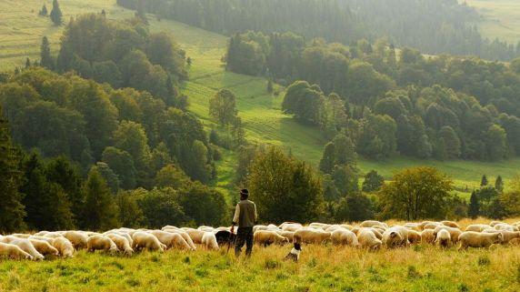 self-love shepherds